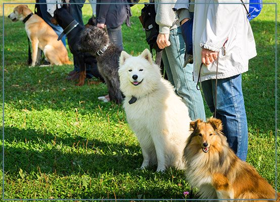 Dog training and Puppy training obedience classes