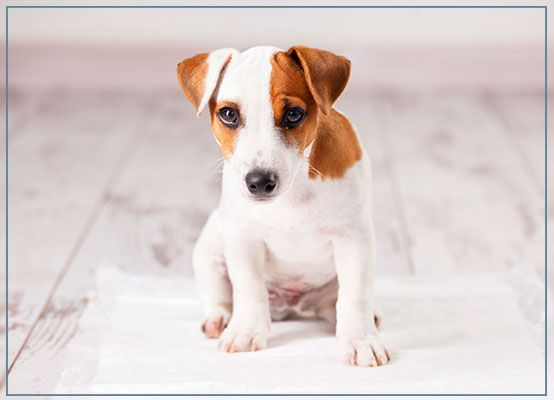 Puppy Training Obedience